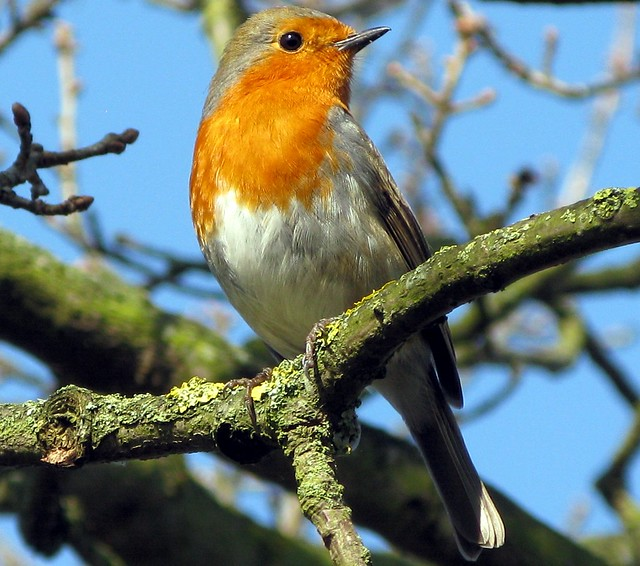Singing In Today's Sunshine