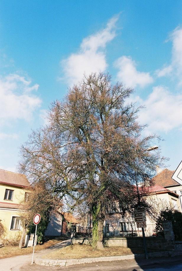 前往 Telč 的街景