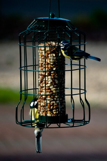 170312_ tits at the feeder no4