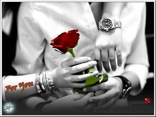 6855694085 27a81b33ff Celebrate Valentines Day with Symbol of Love   The RED ROSES