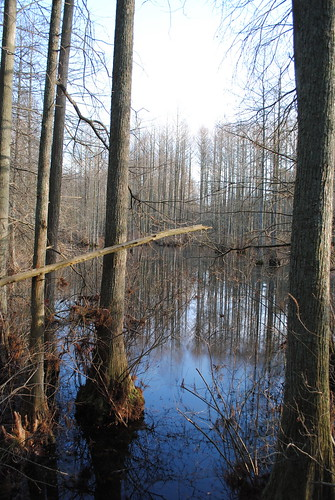 statepark park trees tree water pond cypress delaware baldcypresstrees watertrail treeinwater laurelde trappondstatepark sussexcountyde