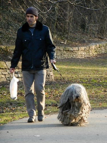 Is that a dog or a mop?