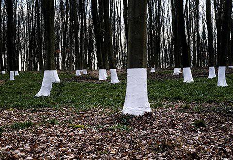 Zander Olsen_Tree, Line_003