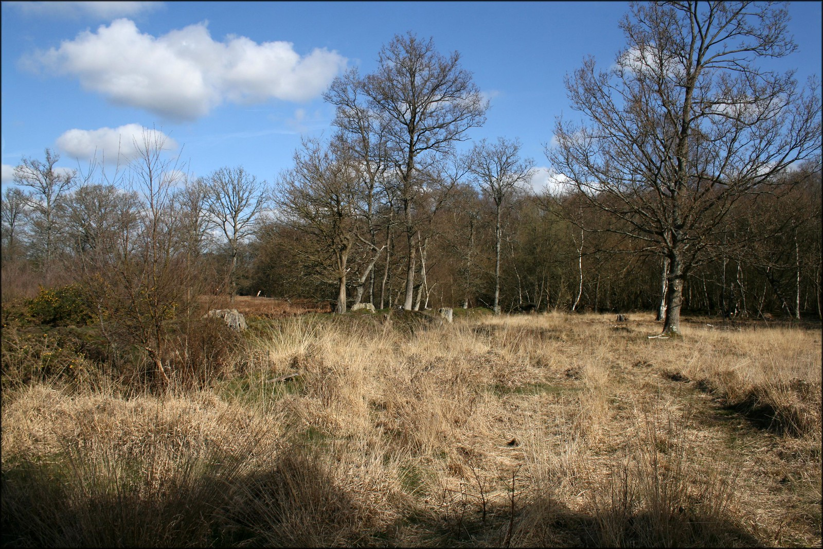 Bagmoor Common Near Milford, Surrey