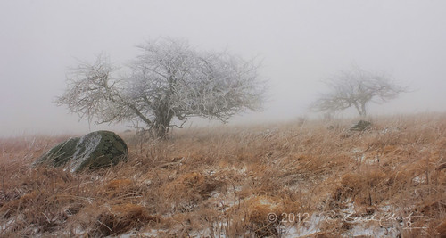 Fog and Sleet on Little Hump Mountain