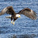 Eagle Wingspan by w4nd3rl0st (InspiredinDesMoines)