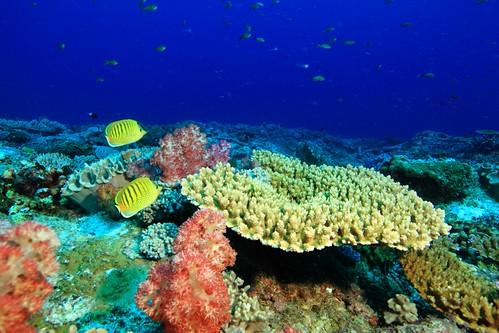 健康美麗的珊瑚礁與珊瑚礁生態系。圖片提供:海管處。