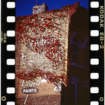 For an entire summer, Jump photographed the slow growth of vines over an ad for Eaglo Paint in Brooklyn. Jump remembers that the effects of nature made an impression on him. He wasn't sure what would come of documenting the transition, but only a few weeks after the final photograph of the Eaglo sign that he took in 1998, painters scraped away the vines and covered it over with a silver, water-resistant paint. Eaglo Paint company used a great deal of toxic chemicals in the manufacture of its paints, which help them last a century in the bitter cold and blistering heat of New York's seasons.  Photo by Frank Jump.