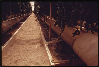 View inside one of the solar greenhouses at the University of Arizona Environmental Research Laboratory at Tucson..., 04/1974.