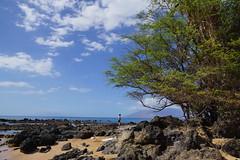 2012-02-10 02-19 Maui, Hawaii 252 Wailea, Ulua Beach