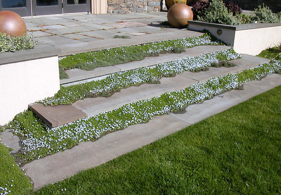 Groundcover transforms stone steps into a magic carpet.