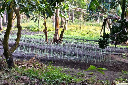 organic farm monteverde costa rica