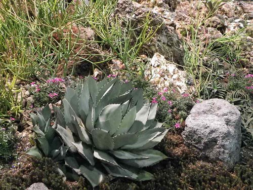 Succulent in Rocks - Philadelphia Flower Show 2012