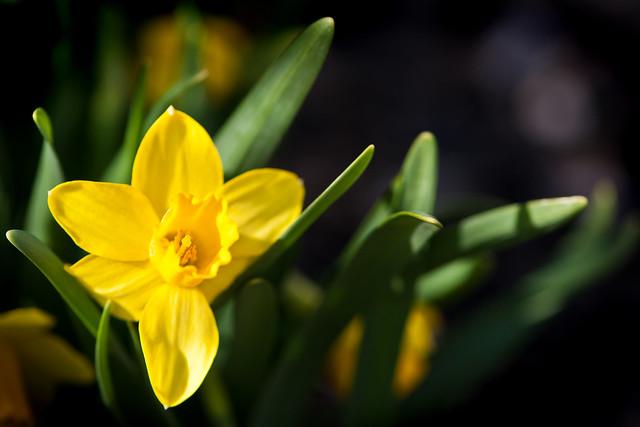 024 flower