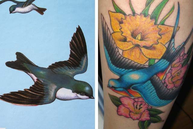 bird book compare to tattoo