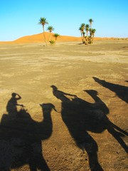 Explorers shadows in the desert