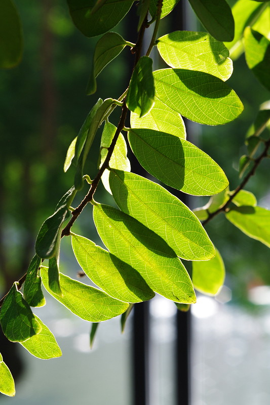 發亮的樹葉~~