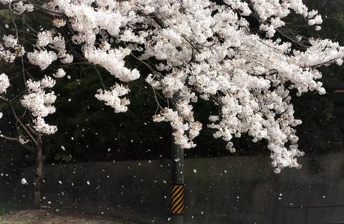 Singing in the Rain - 無料写真検索fotoq