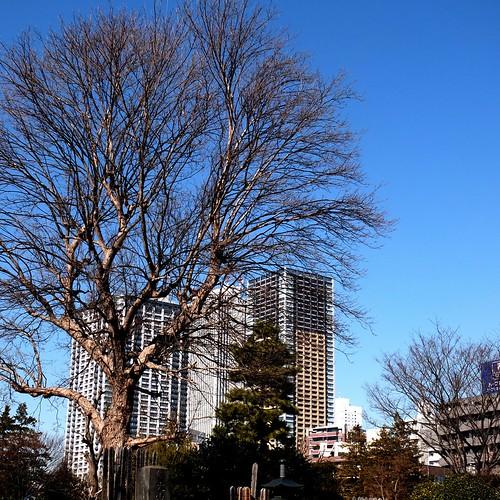 雑司ヶ谷霊園 / Zoshigaya Cemetery
