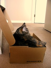 The cat wonders why perfectly good boxes come filled with shoes.