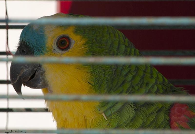 Costa Nova'12 0080