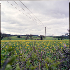 Lines across the landscape
