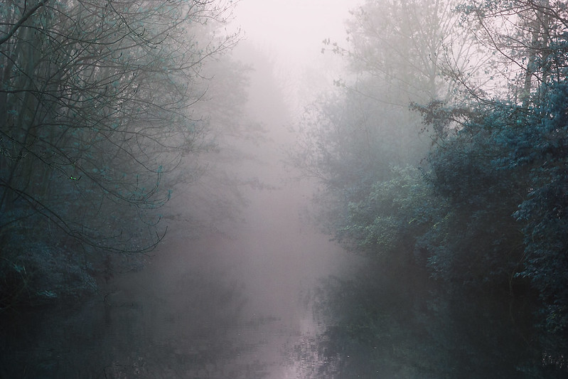 "113 / 365 ""foggy river"""