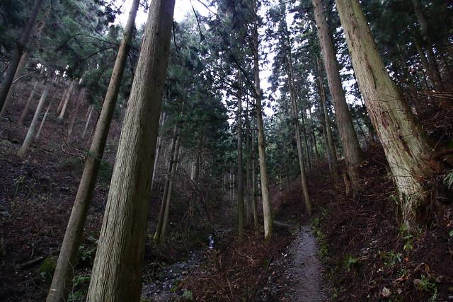 20141230-陣馬山-0029.jpg