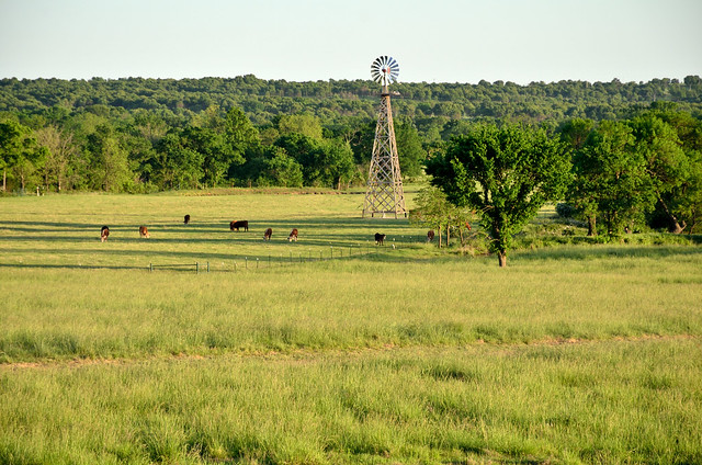 windmill, pasture with cows 7