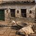 RAMNAGAR : SCÈNE DE RUE