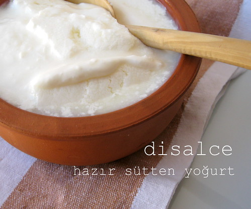 pastörize sütten yoğurt