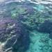 Small photo of Purple Coral, Aitutaki lagoon