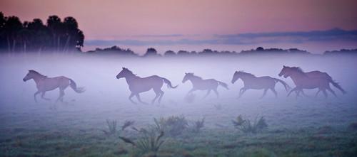 Seminole Tribe Cattle Ranching