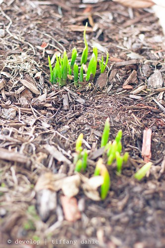 5 | 52: Spring sprouts?!?