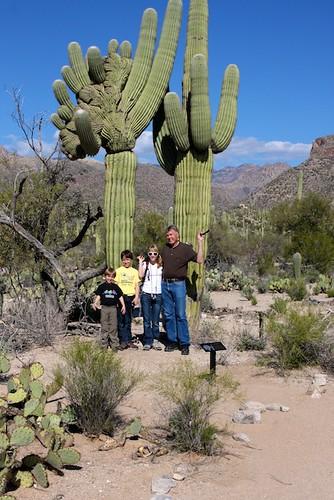 Crowned Saguaro in Sabino Canyon