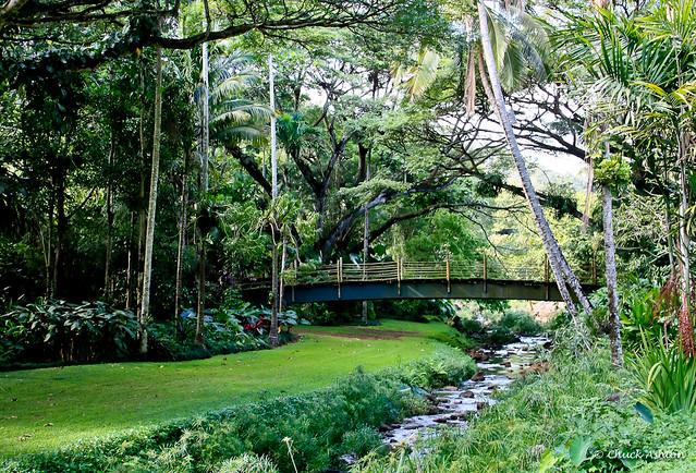 6799116866 7741da1398 z - Hawaii Wedding