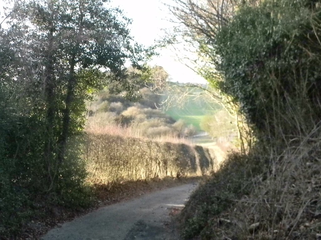 Lit hedge Saunderton Circular via West Wycombe