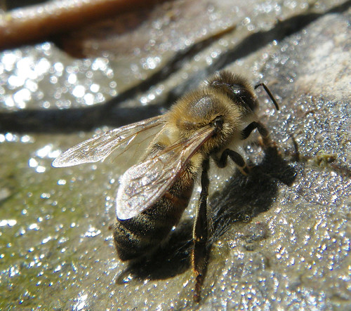 bee on rock