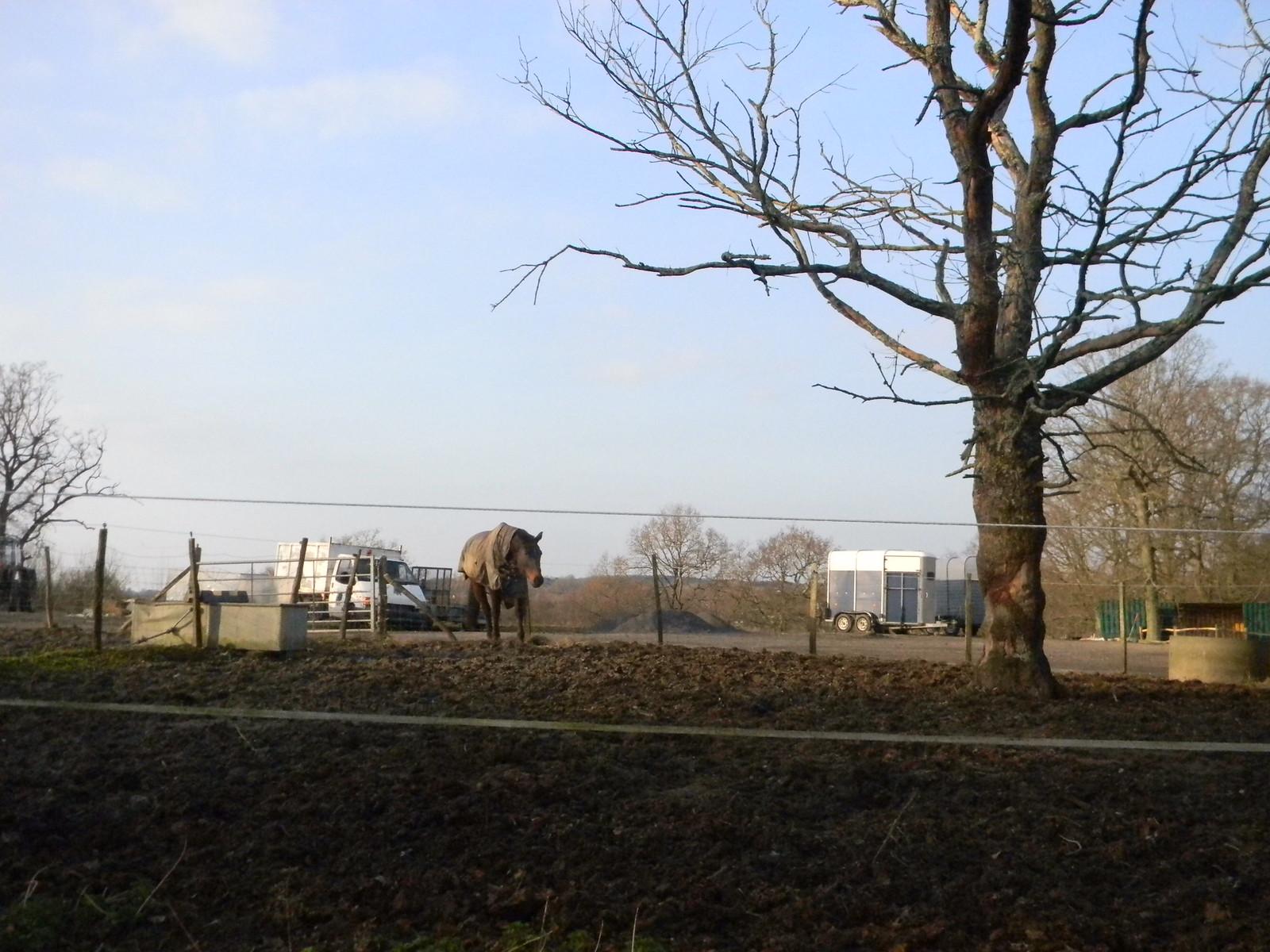 Horse Robertsbridge to Battle