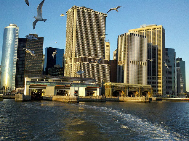 Staten Island Ferry seagulls