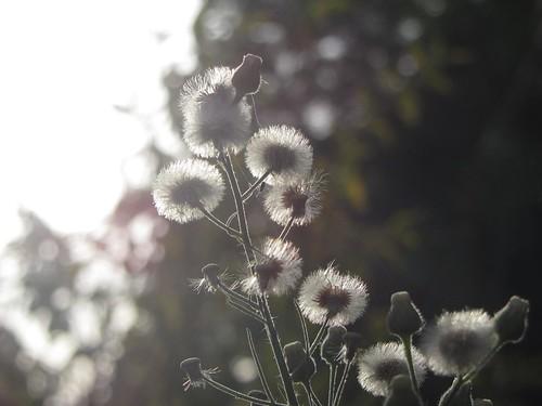 sunset flower kenya nairobi
