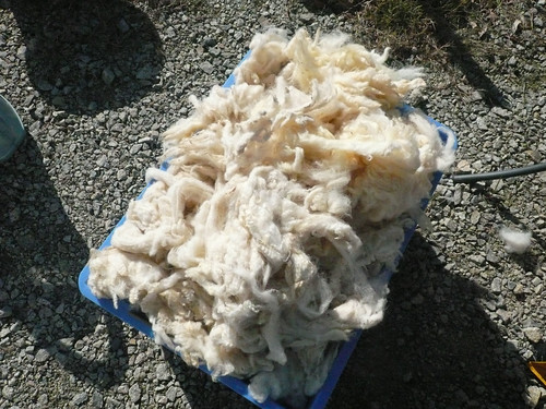 raw fleece