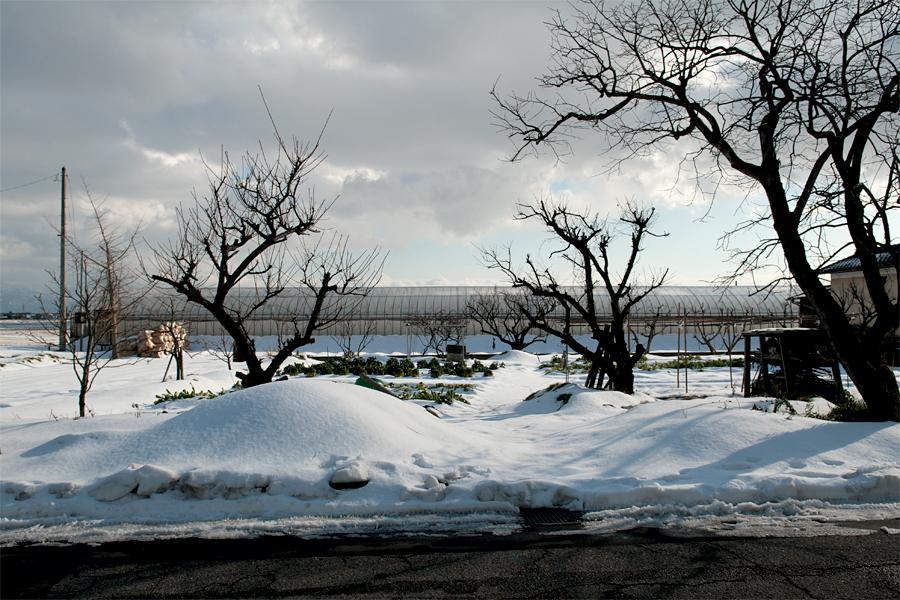 雪景色|新潟県新潟市