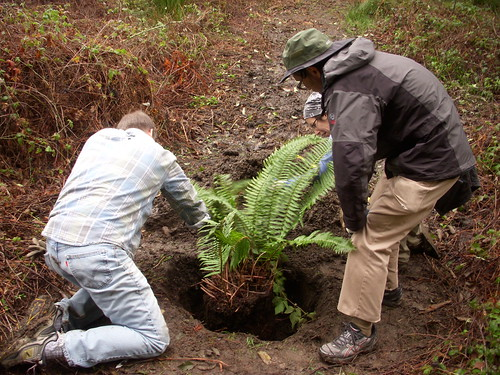 Fern Ravine Planting Day with Friends of Sausal Creek! Saturday, February 11, 2012.