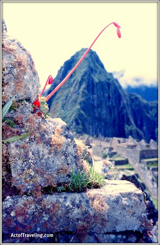 Flower and Macchu Picchu
