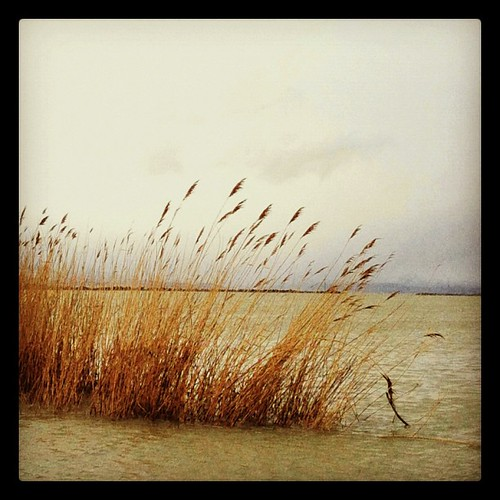 Wind On Water by Suzette ~ desertskyblue ~ Offline