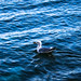 Small photo of Floater