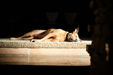 loungingdog-0212