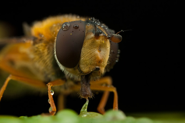 Hover Fly 4