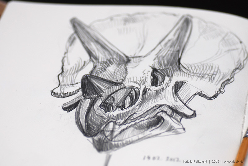 Sketches in Museum of Natural Science